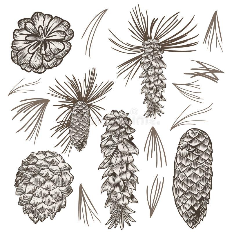 Collection de grains d'arbre de sapin de vecteur pour la conception de Noël illustration libre de droits