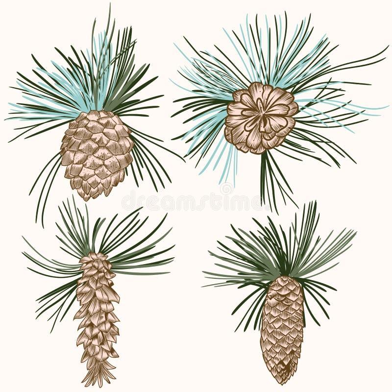 Collection de grains réalistes d'arbre de sapin de vecteur pour le desi de Noël illustration stock