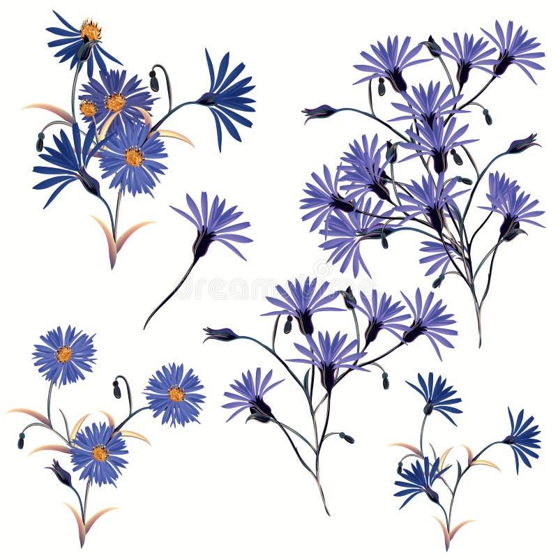 Collection de hautes fleurs bleues réalistes de champ de vecteur illustration libre de droits