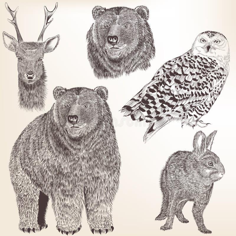 Collection de hauts animaux détaillés de vecteur pour la conception illustration de vecteur