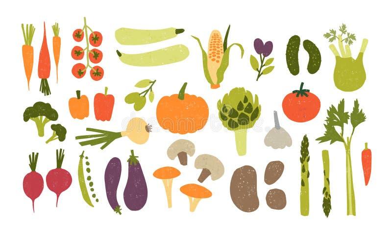Collection de légumes délicieux frais tirés par la main colorés d'isolement sur le fond blanc Paquet de sain et de savoureux illustration libre de droits