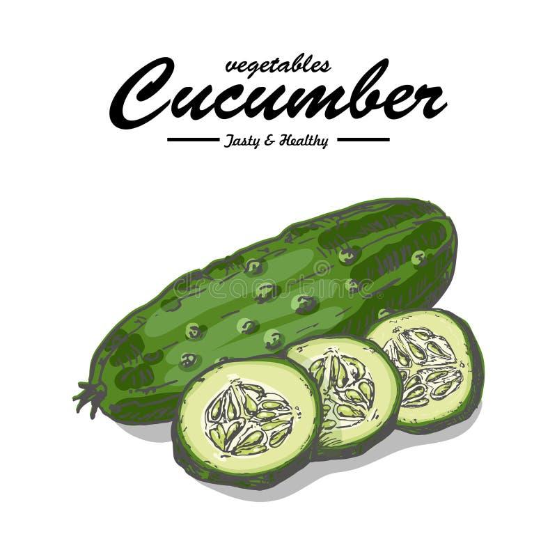 Collection de légumes d'isolement concombre illustration stock