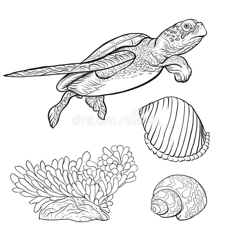 Collection de mer Illustration colorée tirée par la main originale illustration de vecteur
