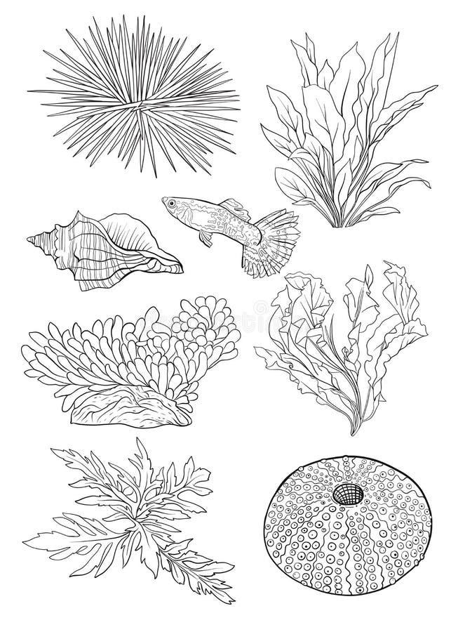 Collection de mer Illustration colorée tirée par la main originale illustration libre de droits