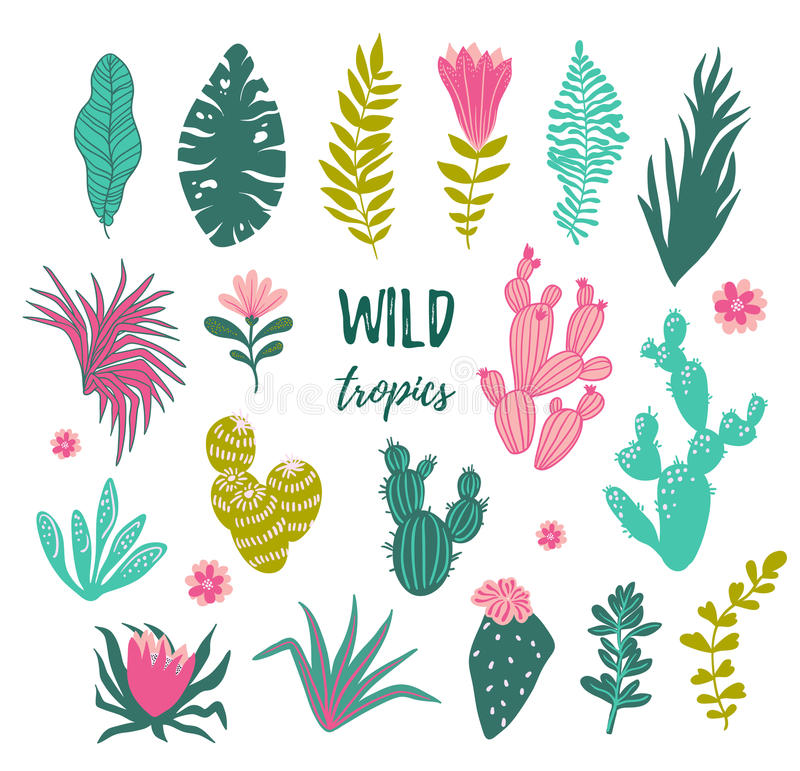 Collection de plantes tropicales, cactus, succulents, fleurs illustration de vecteur