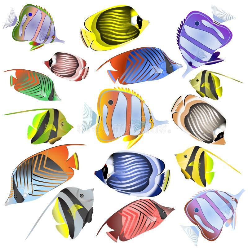 Collection de poisson de mer d'isolement sur le fond blanc photos stock