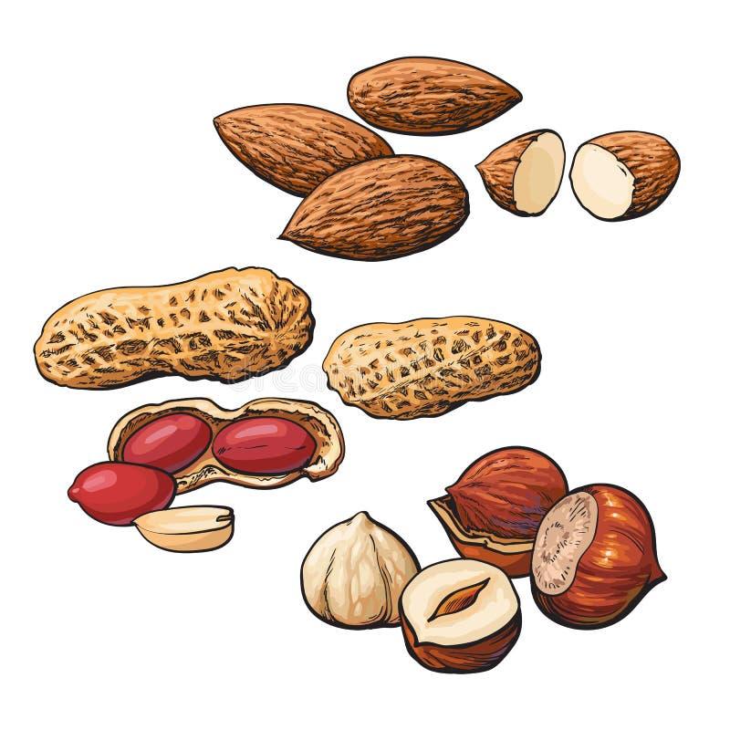 Collection de tas d'amande, de noisette et d'arachide illustration de vecteur