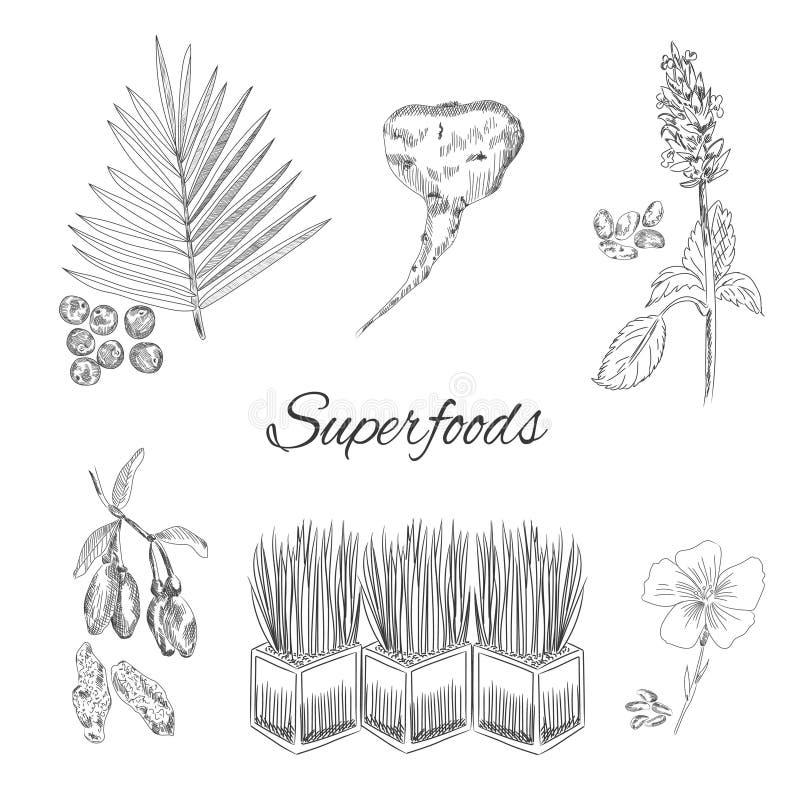 Collection de vecteur de Superfoods illustration de vecteur