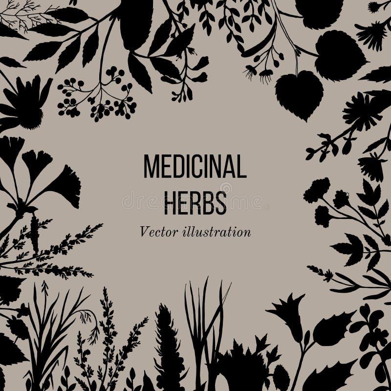 Collection de vintage d'herbes et de plantes médicinales tirées par la main illustration libre de droits