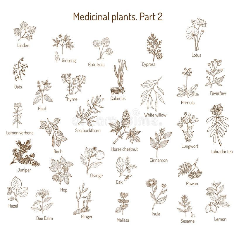 Collection de vintage d'herbes médicales illustration de vecteur