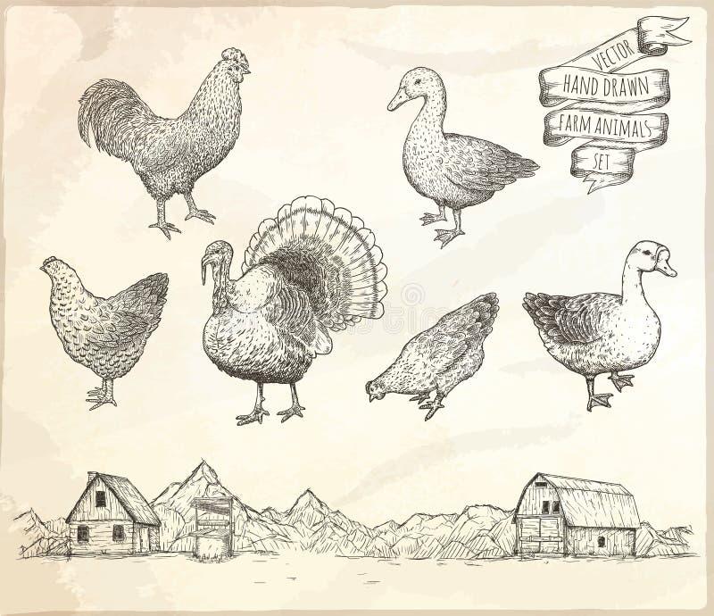 Collection de volaille de ferme illustration de vecteur