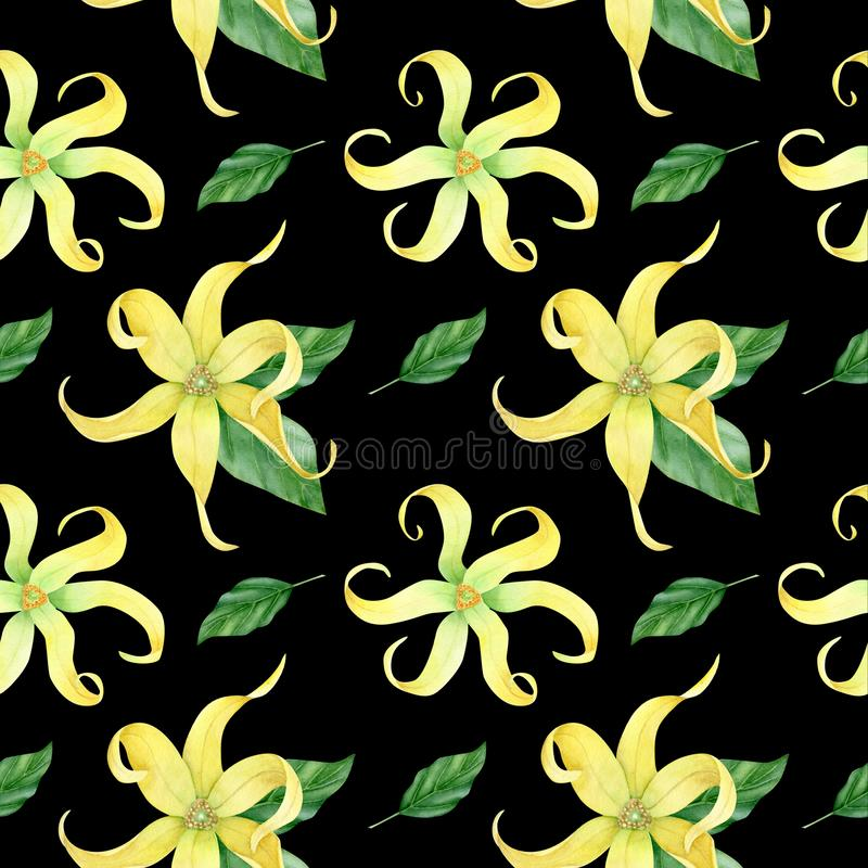 Collection de ylang de ylang d'aquarelle image stock