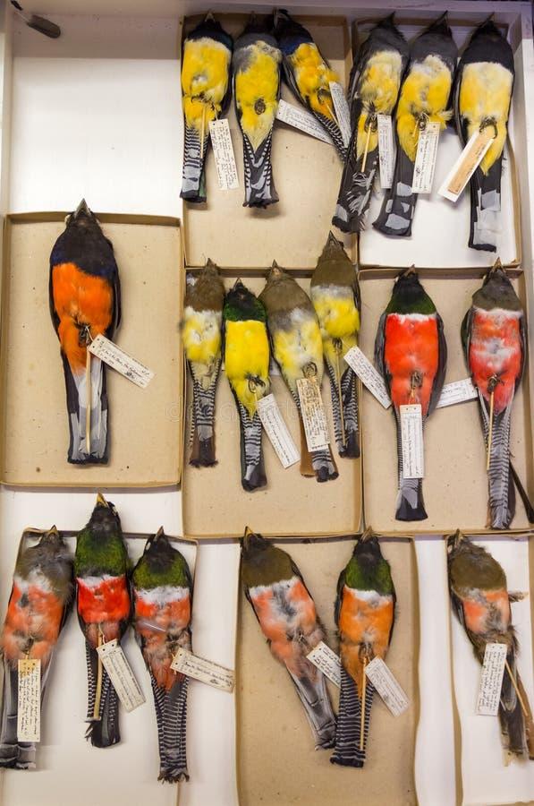 Collection de zoologie, oiseaux préservés pour la recherche et éducation photo libre de droits