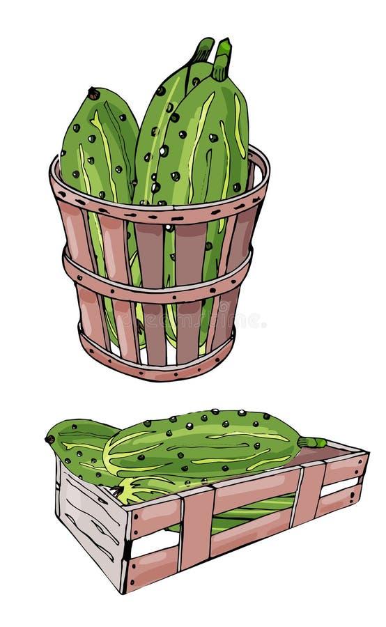 Collection des concombres, de la bo?te et du panier tir?s par la main verts illustration de vecteur