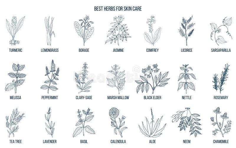 Collection des meilleures herbes pour des soins de la peau illustration libre de droits