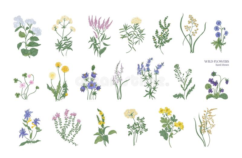 Collection of detailed drawings of different botanical flowers and decorative flowering plants isolated on white. Background. Bundle of elegant floral royalty free illustration