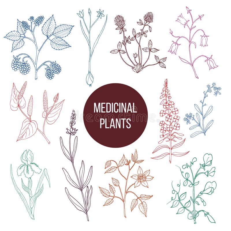 Collection différente de plantes médicinales illustration libre de droits