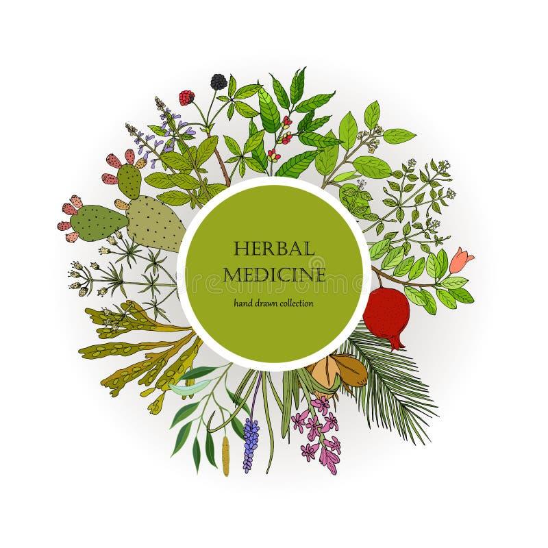 Collection différente de plantes médicinales illustration de vecteur