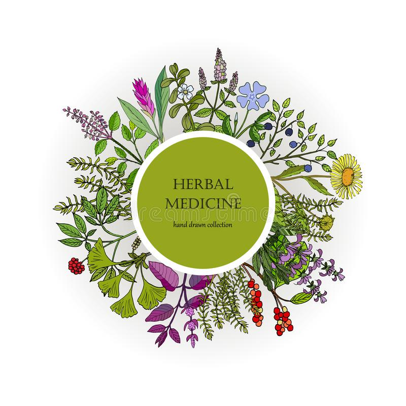 Collection différente de plantes médicinales illustration stock