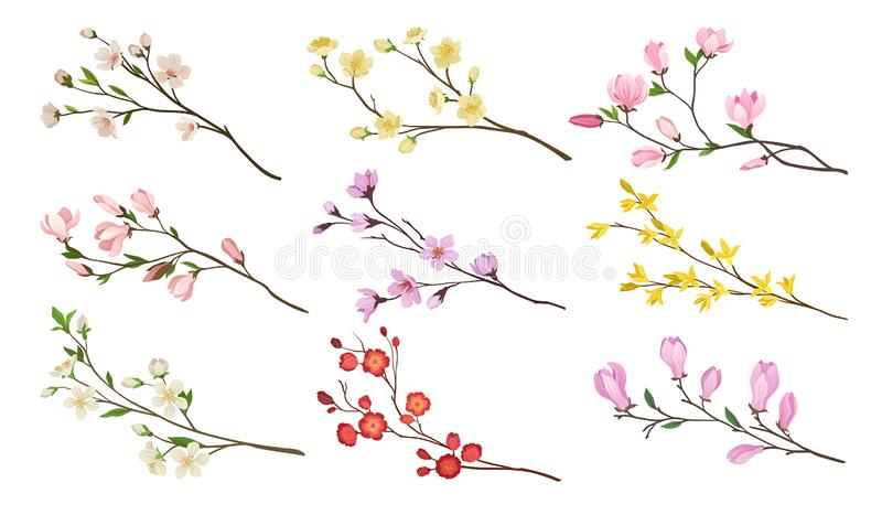 Set of blooming branches of fruit trees. Twigs with flowers and green leaves. Nature theme. Detailed flat vector icons. Collection of different blooming branches vector illustration