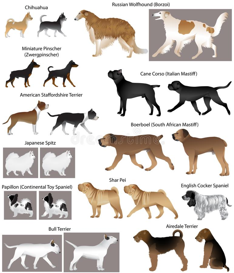 Collection of different breeds of dogs. American staffordshire terrier, boerboel South African mastiff, papillon continental toy spaniel, chihuahua, shar pei vector illustration