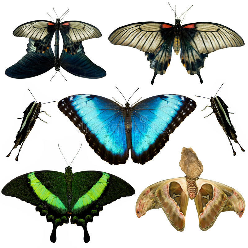 Collection of different butterflies royalty free stock image