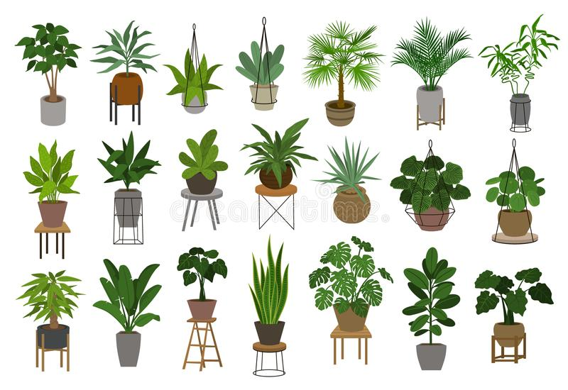 Collection of different decor house indoor garden plants in pots and stands royalty free illustration