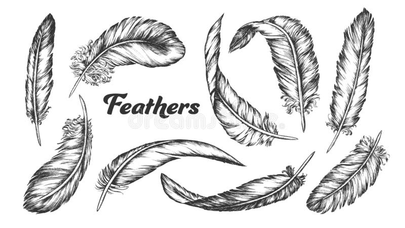 Collection of Different Feathers Set Ink Vector royalty free illustration