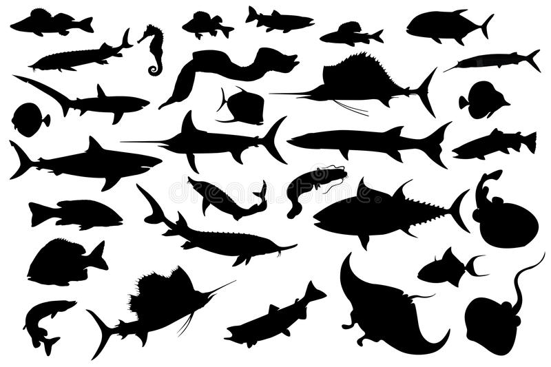 Download Collection Of Different Fish Silhouettes Stock Illustration - Image: 17552759