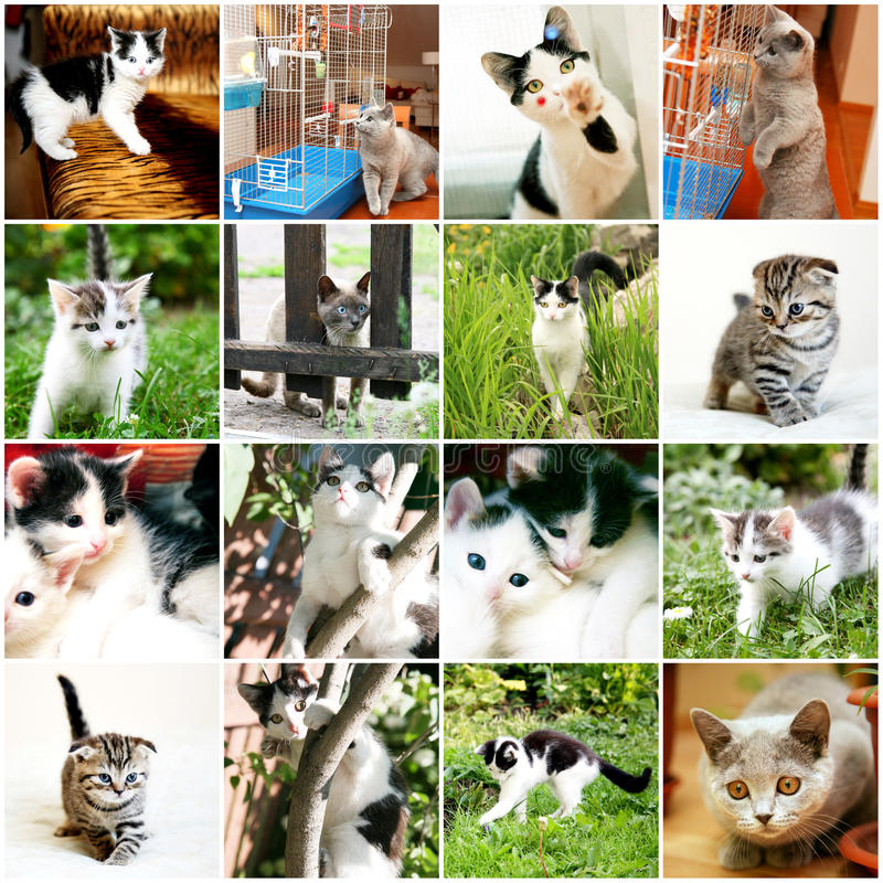Collection of different funny kitten stock image