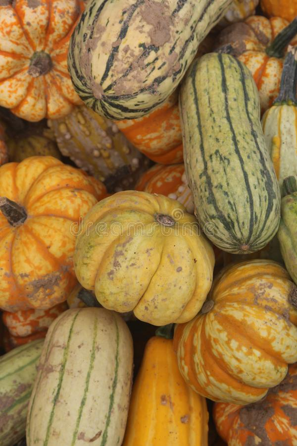 Collection of different pumkins stock photos