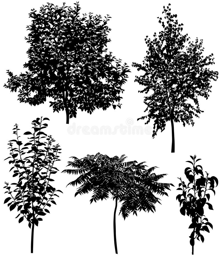 Collection of different species of trees: cherry, pear, plum, birch, sumac vector illustration