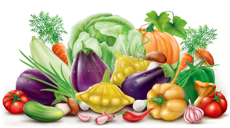 Collection different vegetables stock illustration
