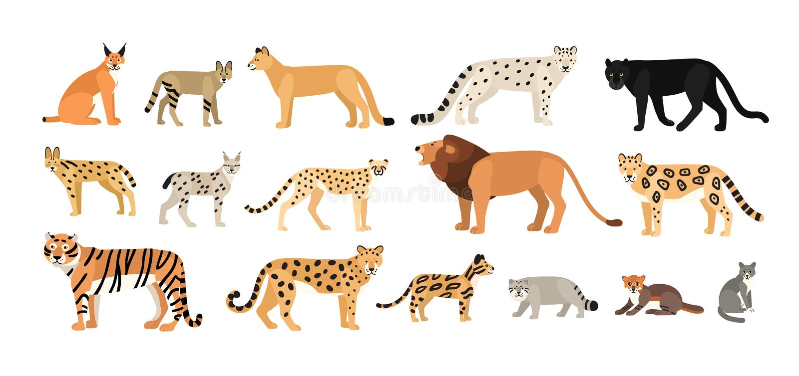 Collection of different wild and domestic cats. Exotic animals vector illustration