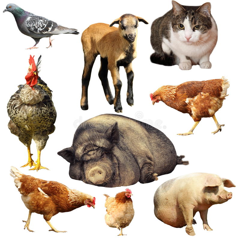 Collection of domestic animals stock images