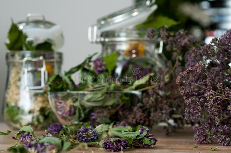 Collection of dried herbs stock photo