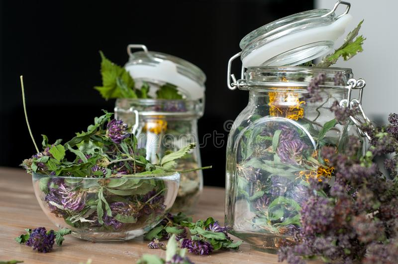 Collection of dried herbs stock photography