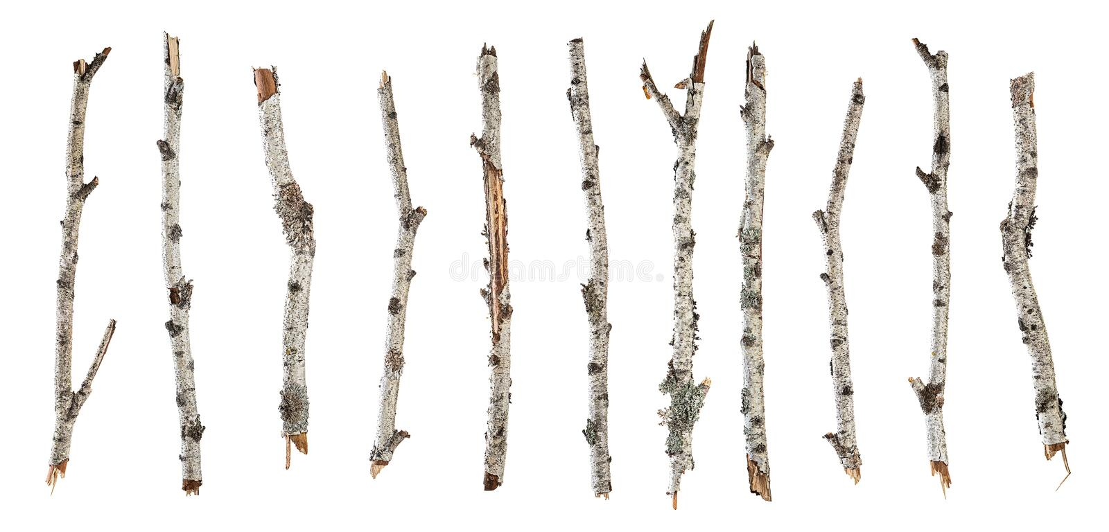 Collection dry branches birch isolated on white royalty free stock photo