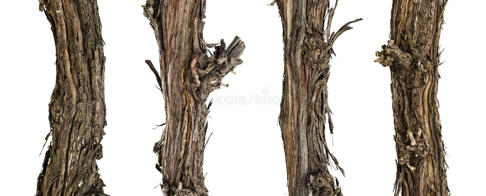 Collection dry branches of the vine. Isolated on white, including clipping path royalty free stock photos