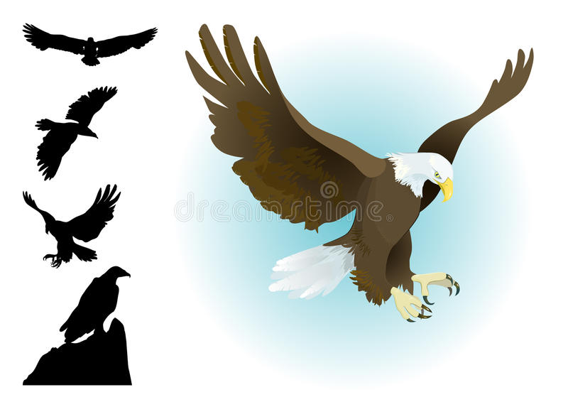Collection of eagles landing,flying. Sitting with silhouettes set stock illustration