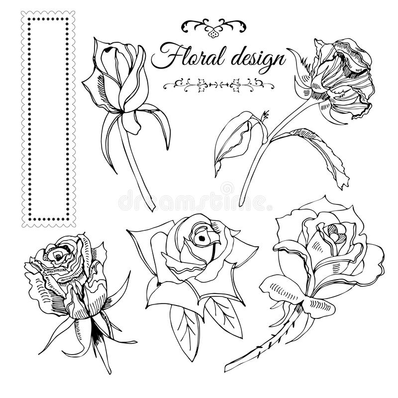 Collection of elements of blossoming monochrome rose flowers and frame. Hand drawn ink sketch on white background. Vector illustration royalty free illustration