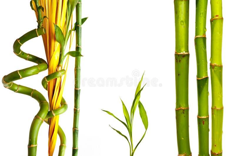 Collection en bambou image libre de droits