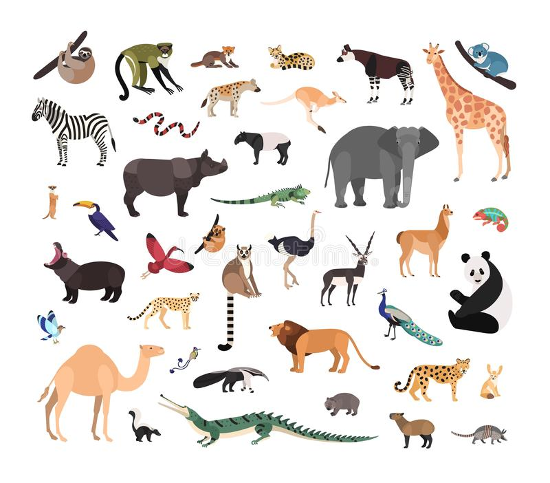 Collection of exotic wild animals isolated on white background. Bundle of fauna species living in savannah, jungle and. Desert. Wildlife set. Colorful vector royalty free illustration