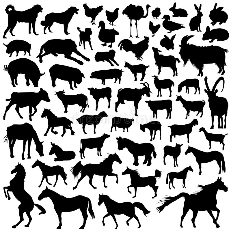 Collection of farm animal vector stock illustration