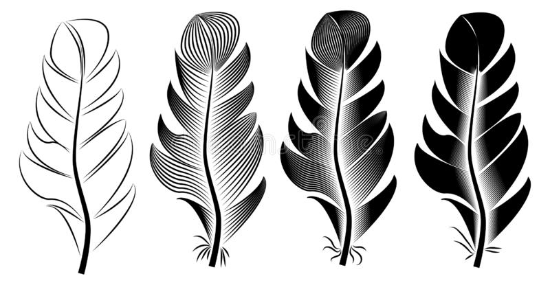 Collection of feather illustration, drawing, engraving, ink, line art vector illustration