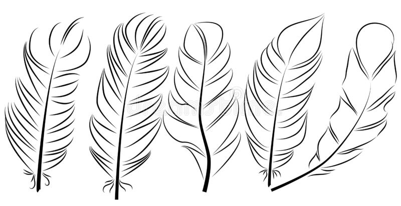 Collection of feather illustration, drawing, engraving, ink, line art. Collection of feather illustration, drawing, engraving, ink line art vector illustration