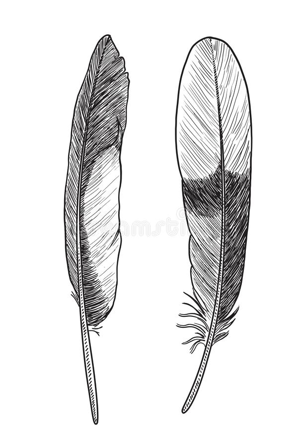 Collection of feather illustration, drawing, engraving, ink, line art, vectorFeather illustration, drawing, engraving, ink, line a royalty free illustration