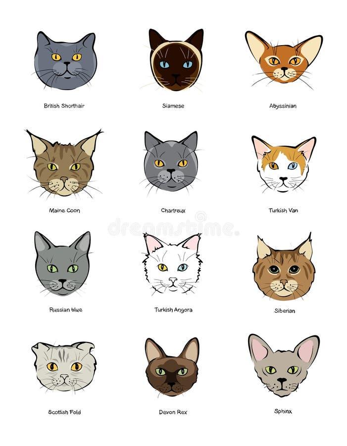 Collection feline muzzles kittens stock illustration
