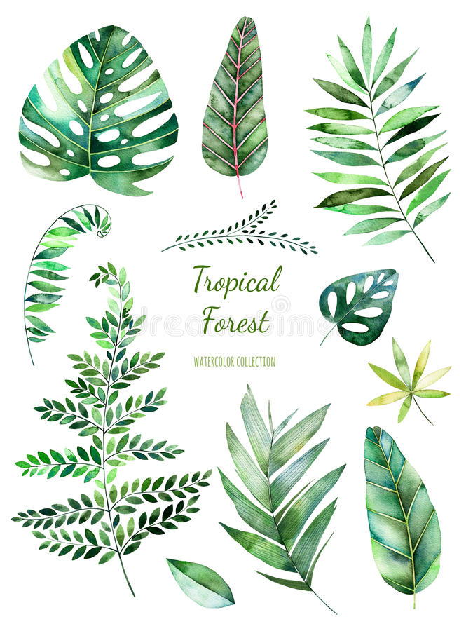Collection feuillue tropicale Éléments floraux d'aquarelle peinte à la main Feuilles d'aquarelle, branches illustration de vecteur