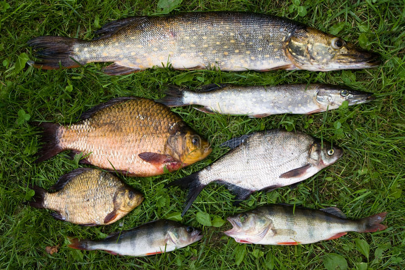 Collection Of Fish Stock Photo